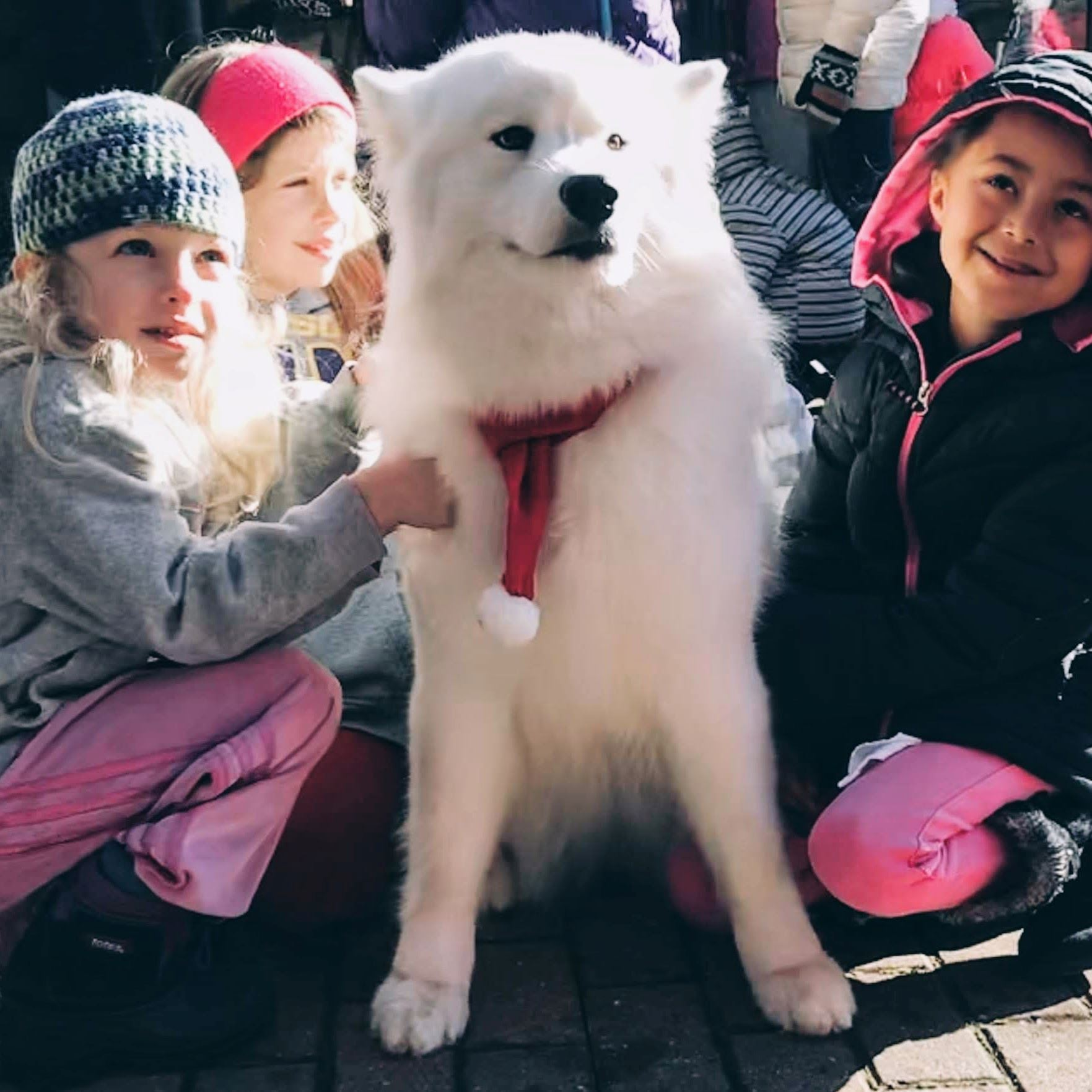 Samoyed Dog Sitting by a Child
